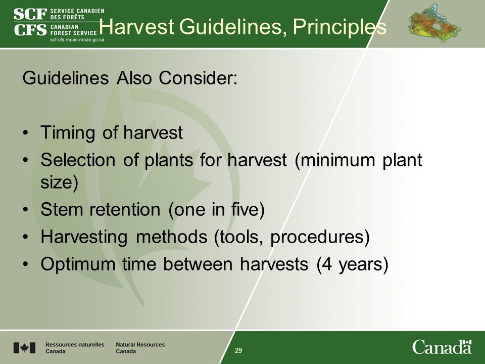 29 Harvest Guidelines, Principles Guidelines Also Consider: Timing of harvest Selection of plants for harvest (minimum plant size) Stem retention (one in five) Harvesting methods (tools, procedures) Optimum time between harvests (4 years)