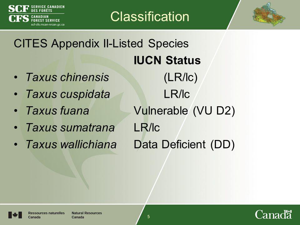 5 Classification CITES Appendix II-Listed Species IUCN Status Taxus chinensis (LR/lc) Taxus cuspidata LR/lc Taxus fuana Vulnerable (VU D2) Taxus sumat