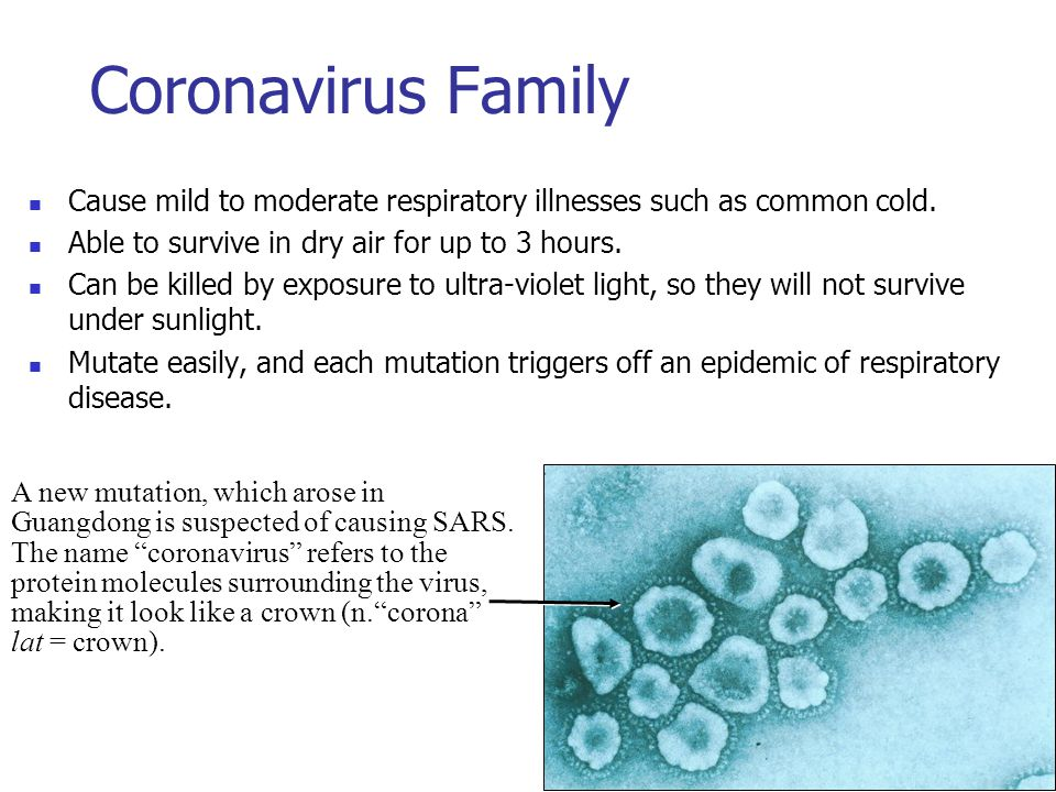 Coronavirus Family Cause mild to moderate respiratory illnesses such as common cold. Able to survive in dry air for up to 3 hours. Can be killed by ex