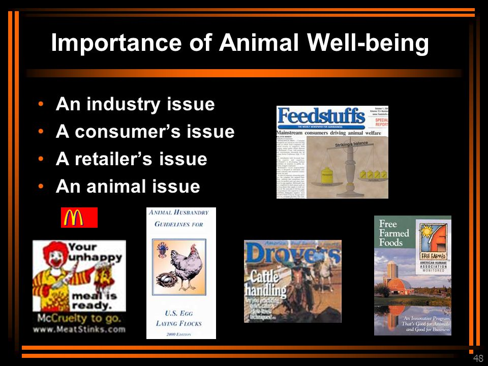 48 Importance of Animal Well-being An industry issue A consumer's issue A retailer's issue An animal issue
