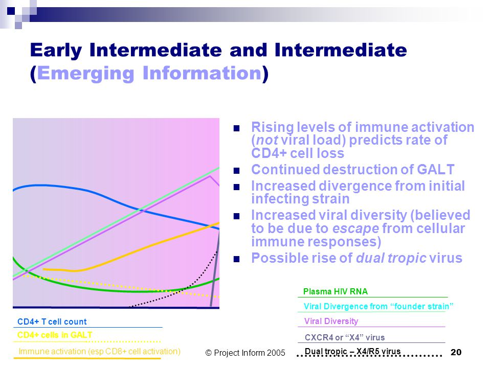 © Project Inform 200520 Early Intermediate and Intermediate (Emerging Information) Rising levels of immune activation (not viral load) predicts rate of CD4+ cell loss Continued destruction of GALT Increased divergence from initial infecting strain Increased viral diversity (believed to be due to escape from cellular immune responses) Possible rise of dual tropic virus Plasma HIV RNA CD4+ T cell count CD4+ cells in GALT Viral Divergence from founder strain Viral Diversity CXCR4 or X4 virus Dual tropic – X4/R5 virus Immune activation (esp CD8+ cell activation)