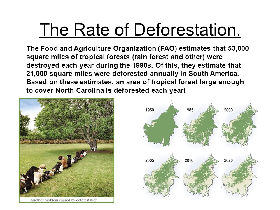 The Rate of Deforestation. The Food and Agriculture Organization (FAO) estimates that 53,000 square miles of tropical forests (rain forest and other)