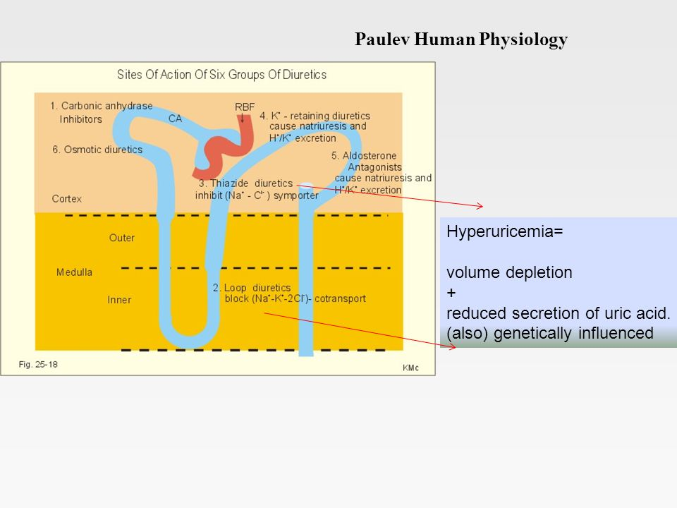 Paulev Human Physiology Hyperuricemia= volume depletion + reduced secretion of uric acid.