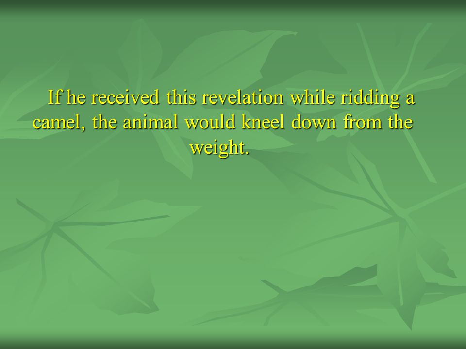 If he received this revelation while ridding a camel, the animal would kneel down from the weight.