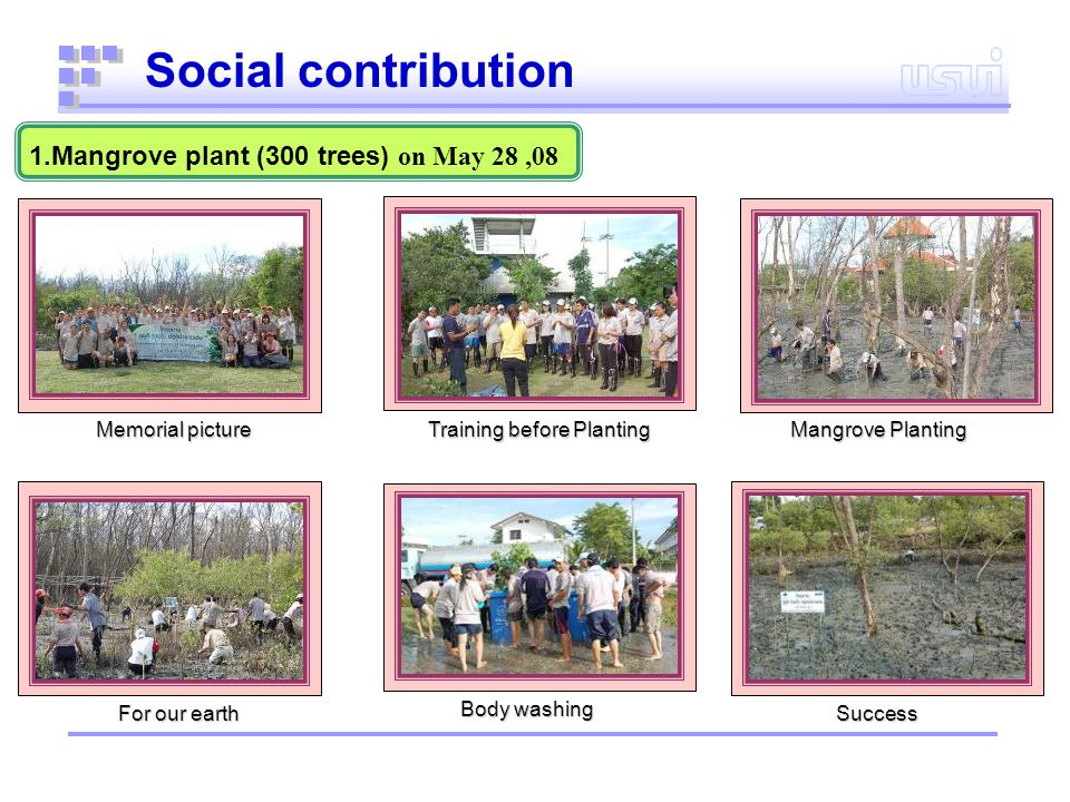1.Mangrove plant (300 trees) on May 28,08 Social contribution Memorial picture Training before Planting Body washing Success Success For our earth Mangrove Planting