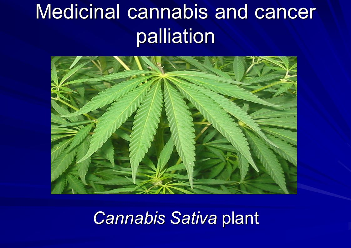 Medicinal cannabis and cancer palliation Cannabis Sativa plant