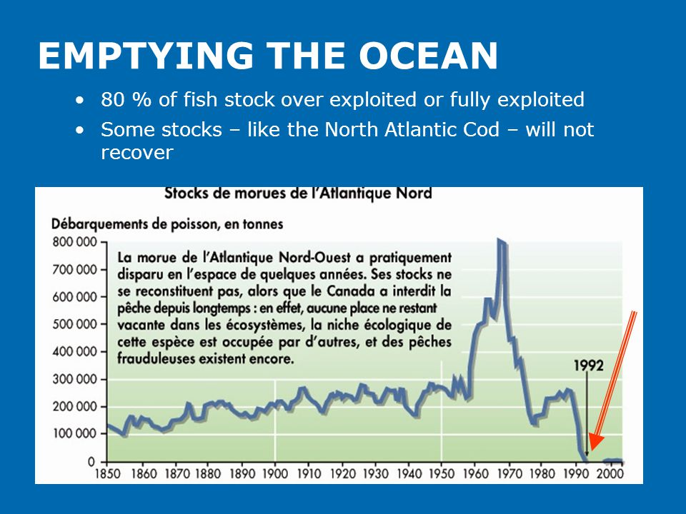 EMPTYING THE OCEAN 80 % of fish stock over exploited or fully exploited Some stocks – like the North Atlantic Cod – will not recover
