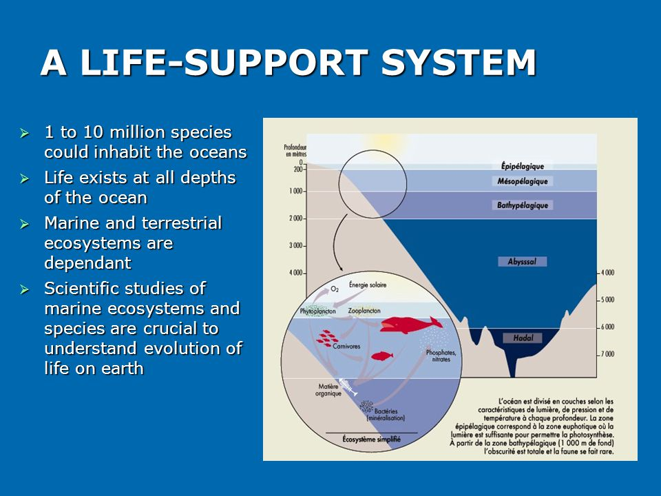 A LIFE-SUPPORT SYSTEM  1 to 10 million species could inhabit the oceans  Life exists at all depths of the ocean  Marine and terrestrial ecosystems