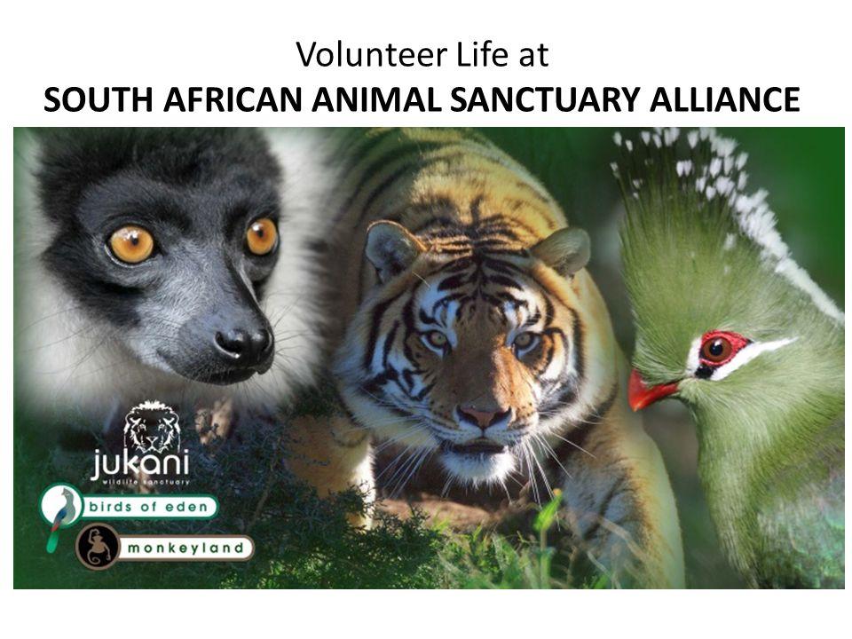 WHO IS SAASA SAASA is the South African Animal Sanctuary Alliance, incorporating Monkeyland Primate Sanctuary, Birds of Eden Bird Aviary Sanctuary, and Jukani Wildlife Sanctuary.