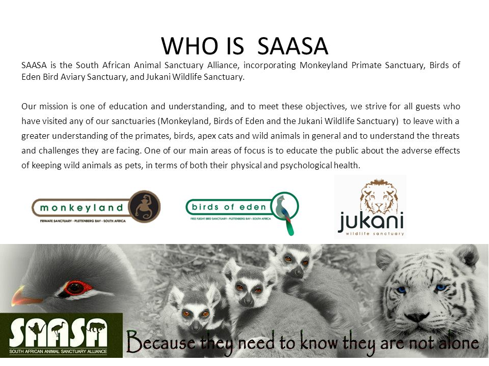 WHO IS SAASA SAASA is the South African Animal Sanctuary Alliance, incorporating Monkeyland Primate Sanctuary, Birds of Eden Bird Aviary Sanctuary, and Jukani Wildlife Sanctuary.