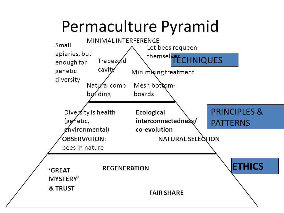 Permaculture Pyramid c ETHICS PRINCIPLES & PATTERNS TECHNIQUES REGENERATION NATURAL SELECTION MINIMAL INTERFERENCE Minimising treatment Ecological interconnectedness/ co-evolution FAIR SHARE OBSERVATION: bees in nature & TRUST 'GREAT MYSTERY' Mesh bottom- boards Trapezoid cavity Natural comb building Small apiaries, but enough for genetic diversity Diversity is health (genetic, environmental) Let bees requeen themselves