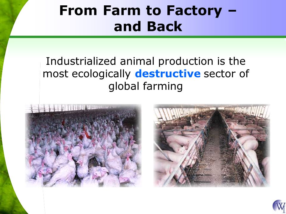 Industrialized animal production is the most ecologically destructive sector of global farming From Farm to Factory – and Back