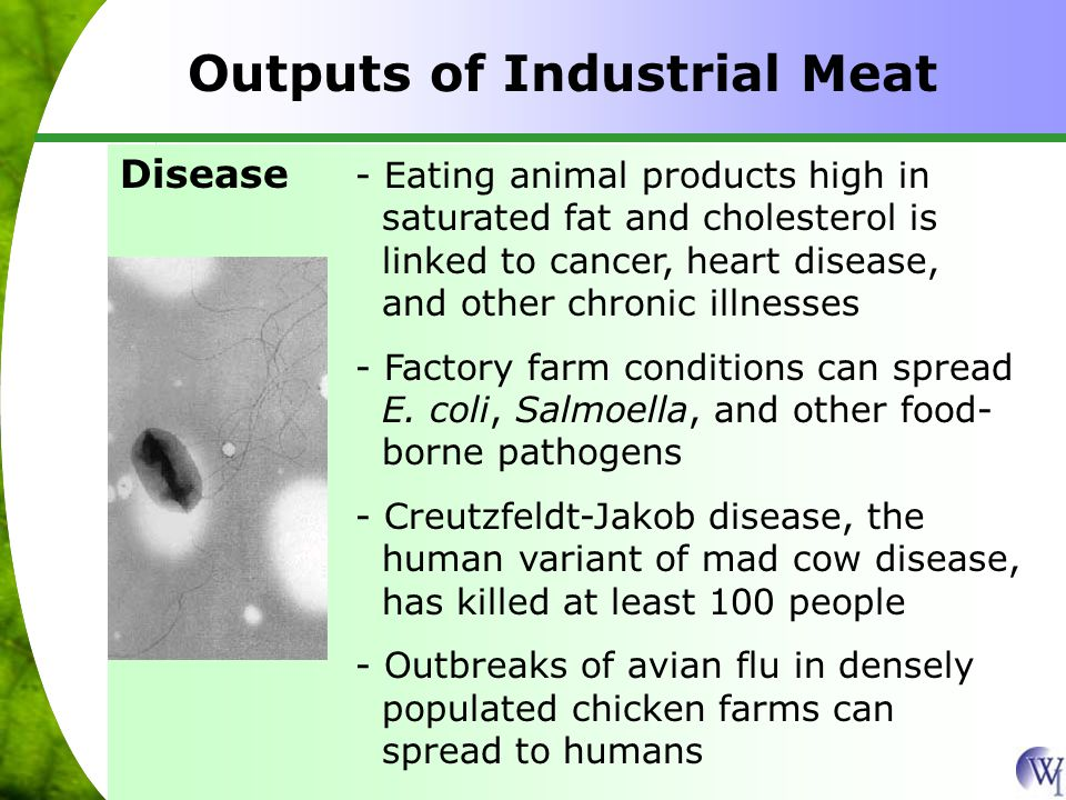 Outputs of Industrial Meat - Eating animal products high in saturated fat and cholesterol is linked to cancer, heart disease, and other chronic illnesses - Factory farm conditions can spread E.