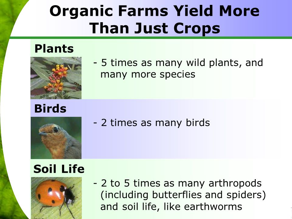 Organic Farms Yield More Than Just Crops Plants - 5 times as many wild plants, and many more species - 2 times as many birds Birds Soil Life - 2 to 5 times as many arthropods (including butterflies and spiders) and soil life, like earthworms