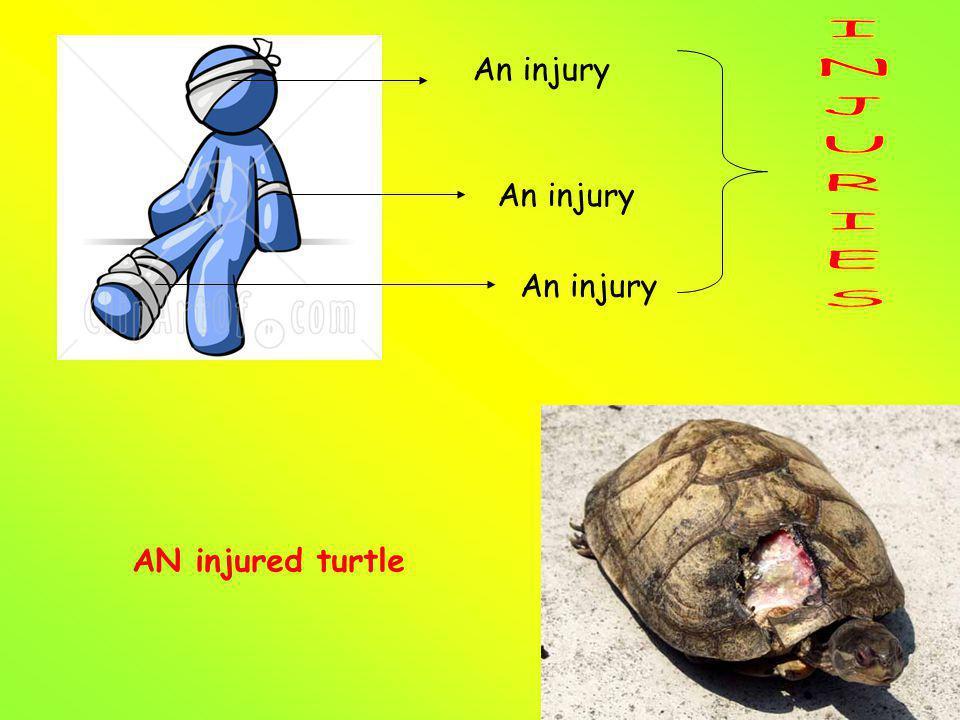 An injury AN injured turtle
