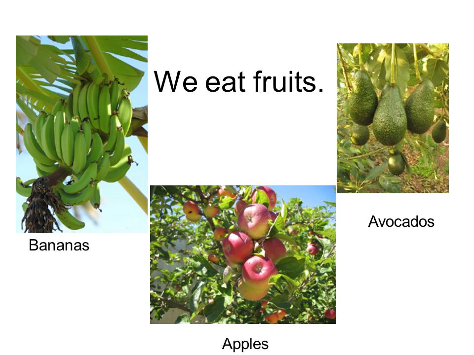 We eat fruits. Bananas Apples Avocados
