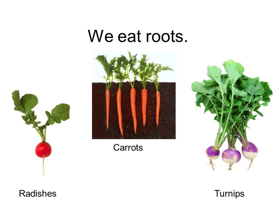 We eat roots. Carrots RadishesTurnips