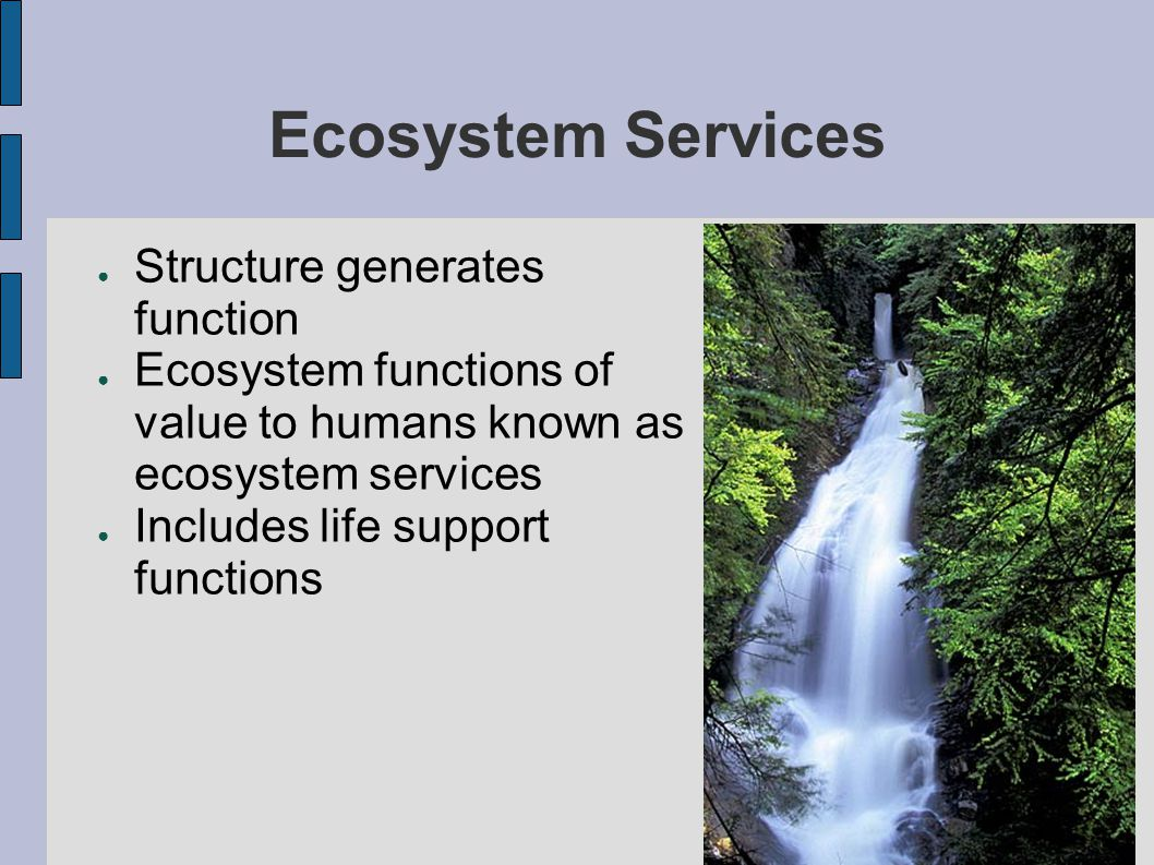 Relative Values ● Both economic production and ecosystem services essential to our survival ● Economics looks at marginal value—value of one more unit  More we have of something, the less one more unit is worth  Value of economic production is decreasing  Value of ecosystem services is increasing  When do we stop converting.