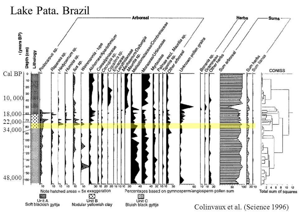 Lake Pata, Brazil 10, 000 18,000 22,000 34,000 48,000 Cal BP Colinvaux et al. (Science 1996)