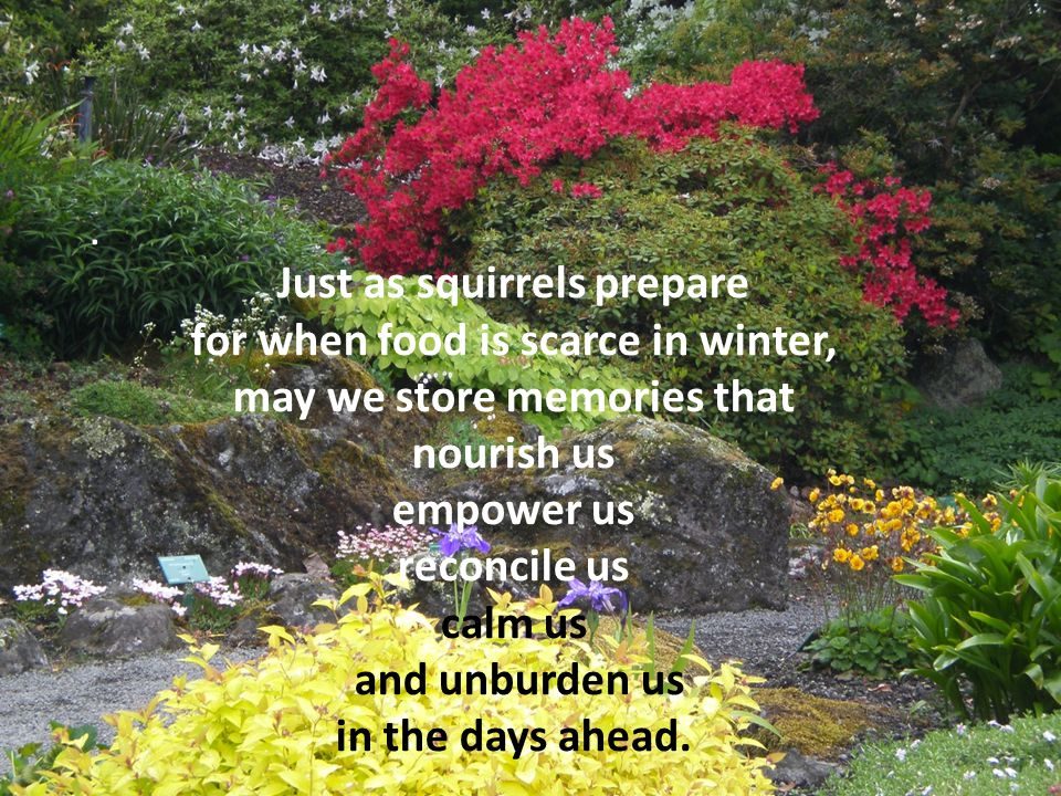 . Just as squirrels prepare for when food is scarce in winter, may we store memories that nourish us empower us reconcile us calm us and unburden us in the days ahead.