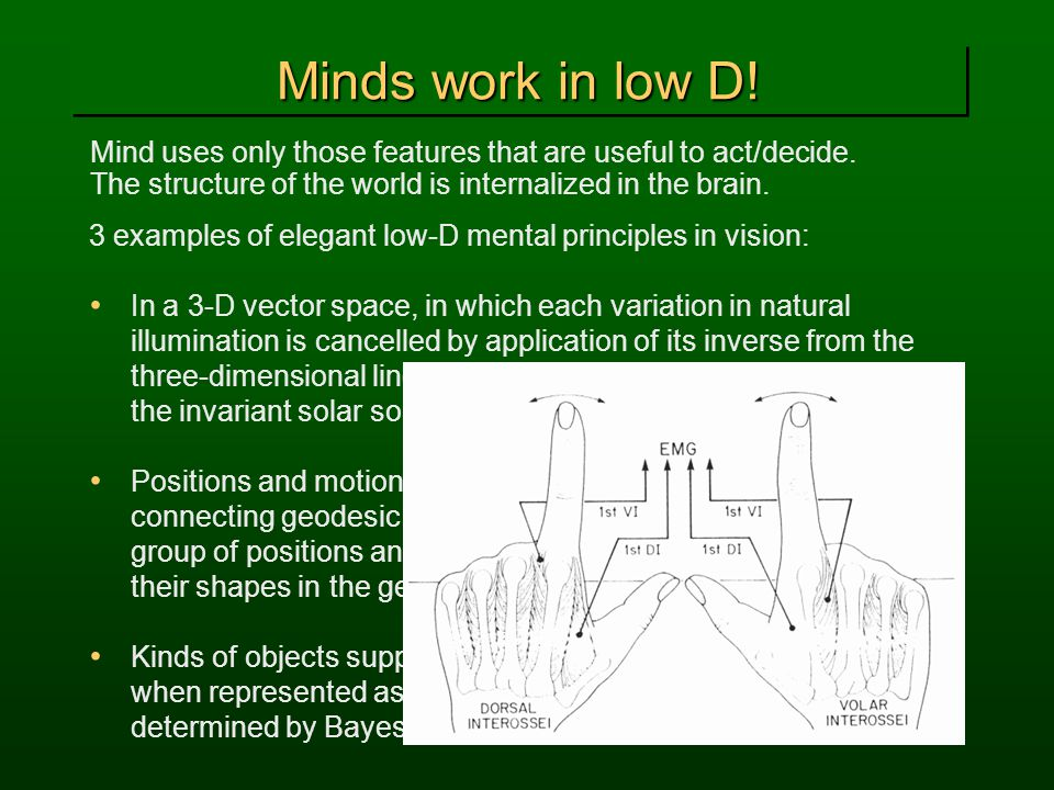 Minds work in low D! Mind uses only those features that are useful to act/decide. The structure of the world is internalized in the brain. 3 examples