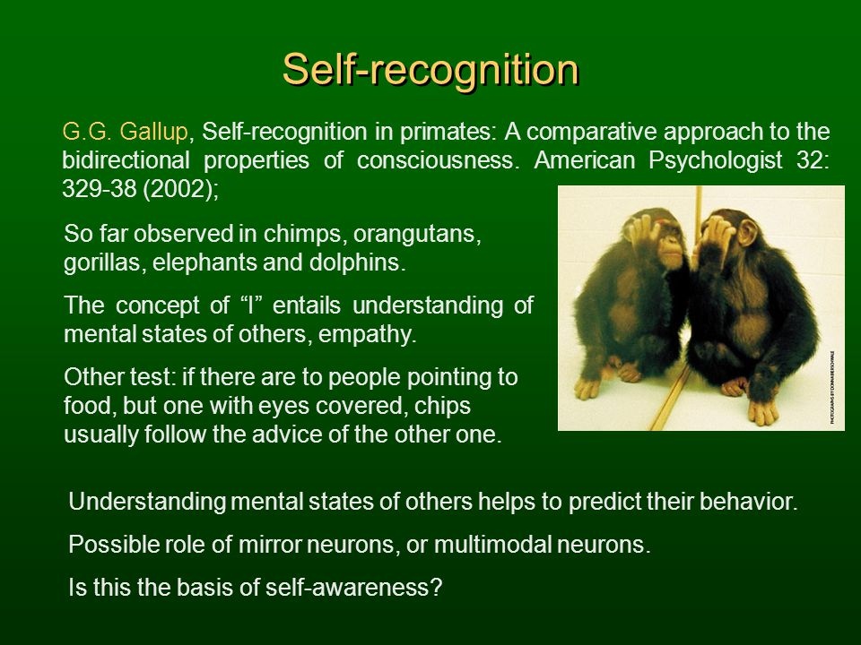 Self-recognition G.G. Gallup, Self-recognition in primates: A comparative approach to the bidirectional properties of consciousness. American Psycholo