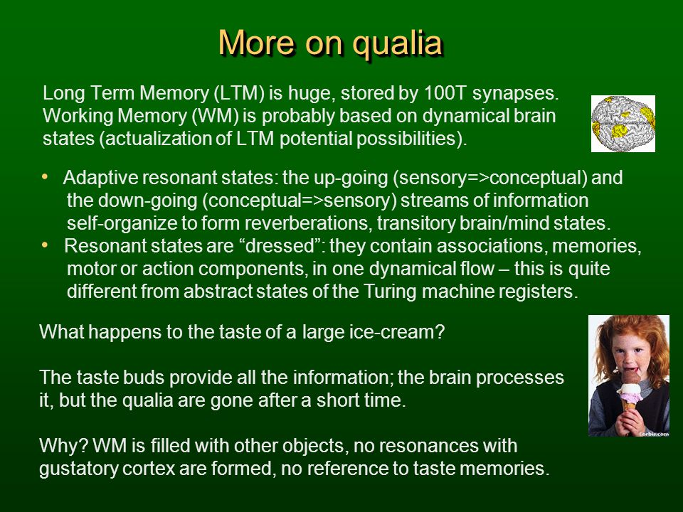 More on qualia Long Term Memory (LTM) is huge, stored by 100T synapses. Working Memory (WM) is probably based on dynamical brain states (actualization