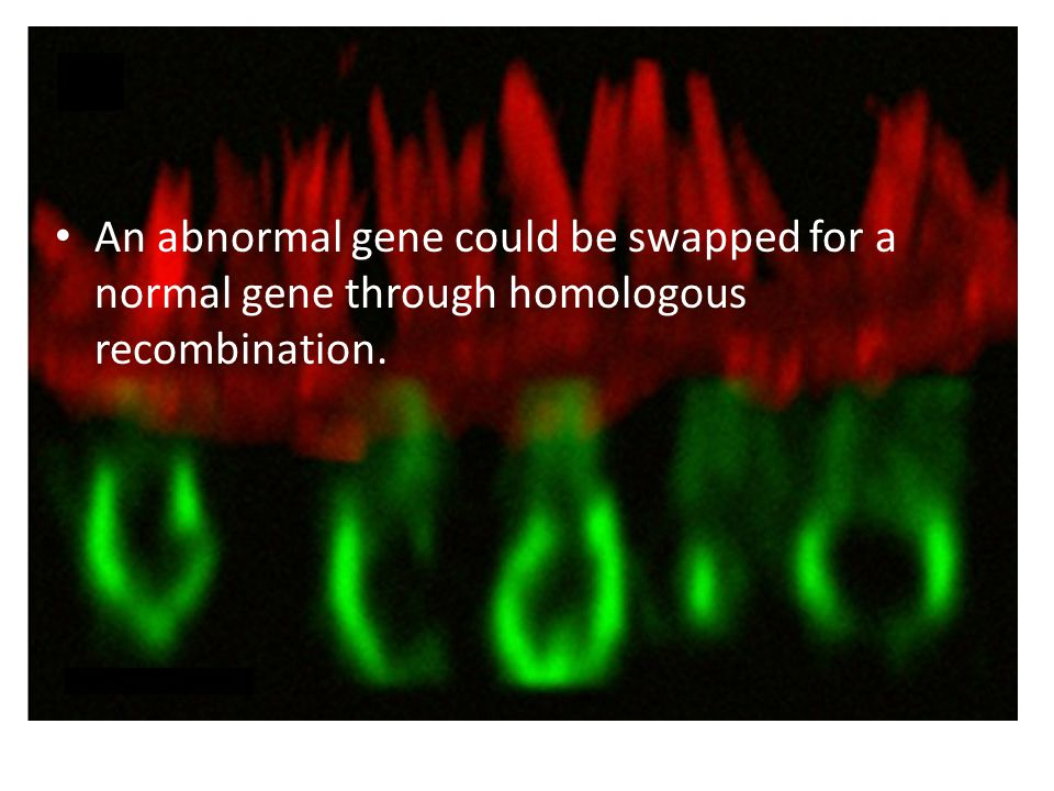 An abnormal gene could be swapped for a normal gene through homologous recombination.