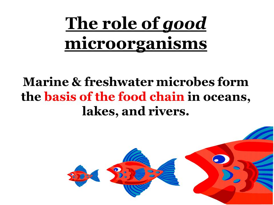 Most microbes are considered beneficial or harmless. 87% beneficial organisms 10% opportunists Pathogens 3%