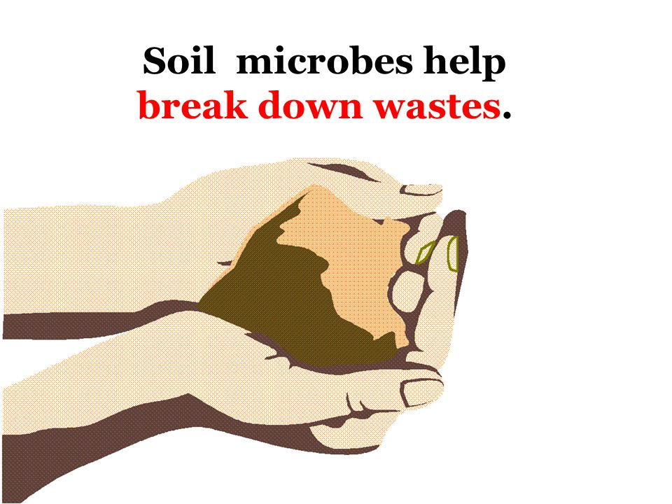 The role of good microorganisms Marine & freshwater microbes form the basis of the food chain in oceans, lakes, and rivers.