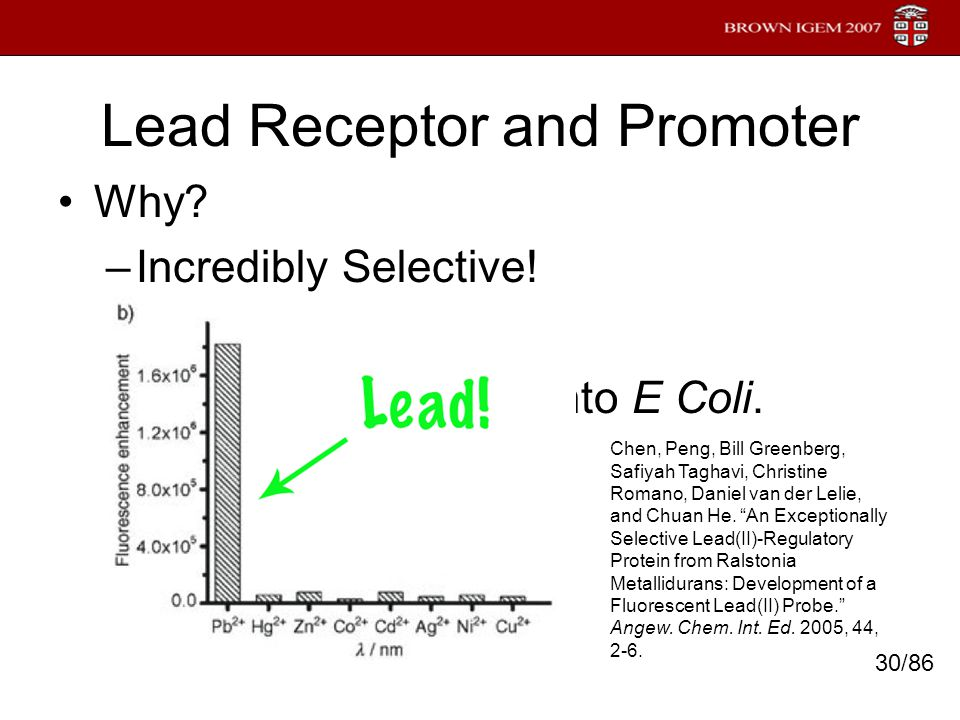 Lead Receptor and Promoter Why? –Incredibly Selective! –Novel –Successfully cloned into E Coli. 30/86 Chen, Peng, Bill Greenberg, Safiyah Taghavi, Chr