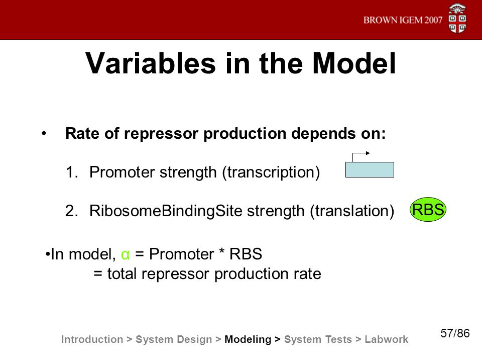 Variables in the Model Rate of repressor production depends on: 1.Promoter strength (transcription) 2.RibosomeBindingSite strength (translation) RBS I