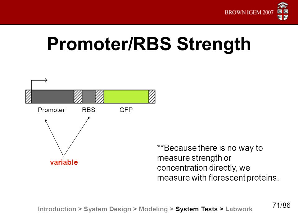 Promoter/RBS Strength Promoter RBS GFP variable **Because there is no way to measure strength or concentration directly, we measure with florescent pr