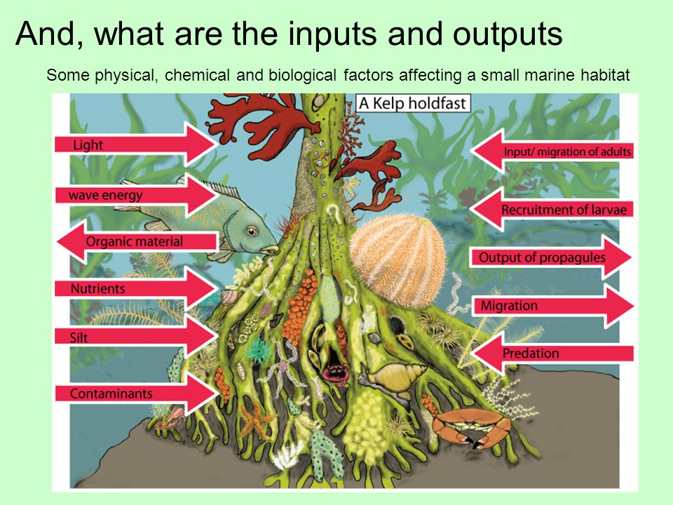 And, what are the inputs and outputs Some physical, chemical and biological factors affecting a small marine habitat