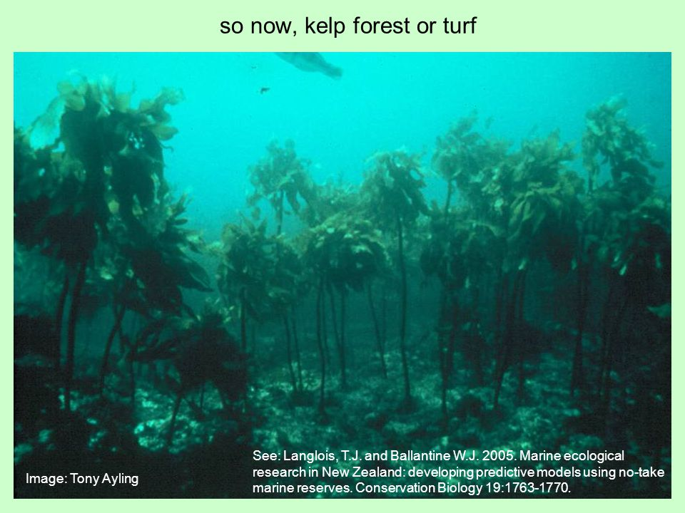 so now, kelp forest or turf Image: Tony Ayling See: Langlois, T.J.