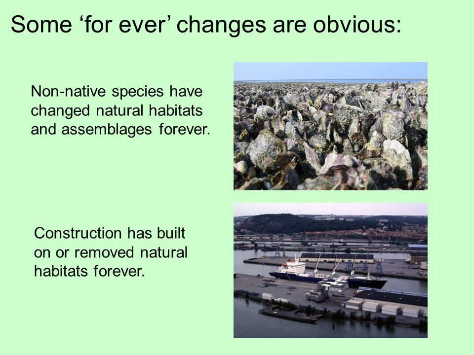 Some 'for ever' changes are obvious: Construction has built on or removed natural habitats forever.