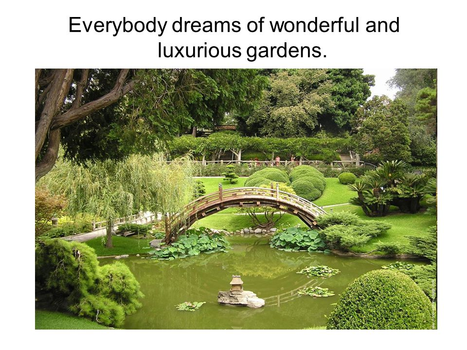 Everybody dreams of wonderful and luxurious gardens.