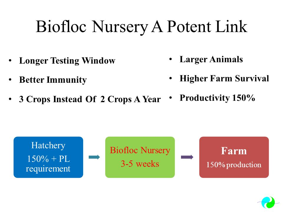 Biofloc Nursery A Potent Link Longer Testing Window Better Immunity 3 Crops Instead Of 2 Crops A Year Larger Animals Higher Farm Survival Productivity