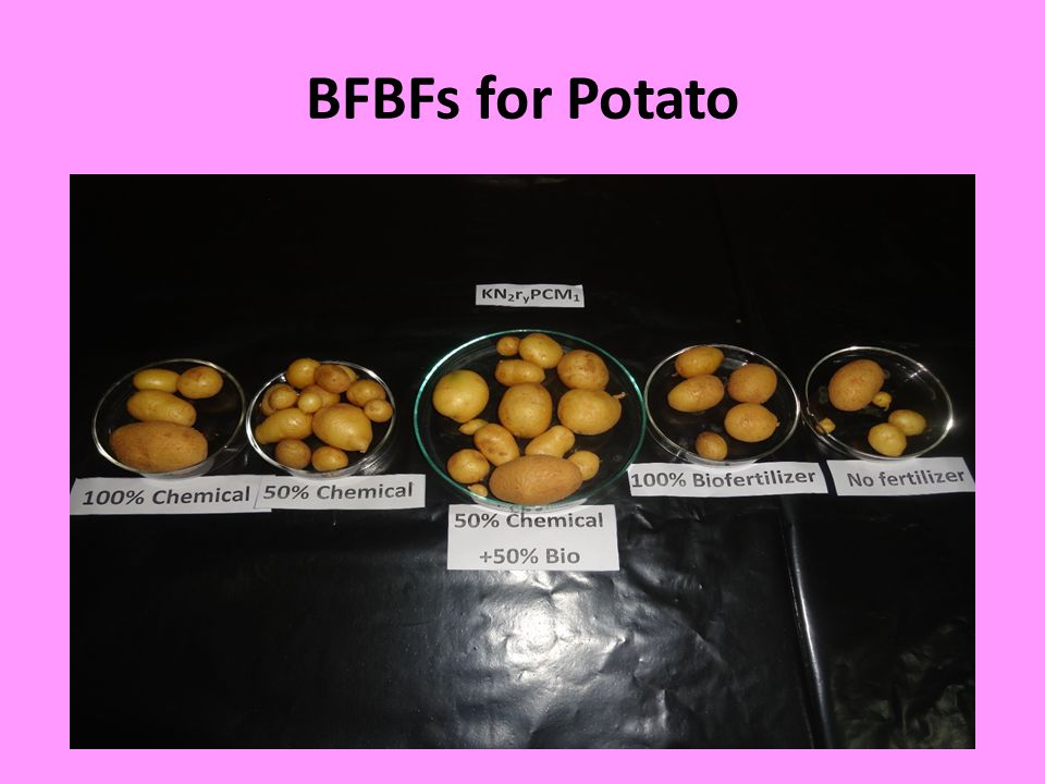 BFBFs for Potato