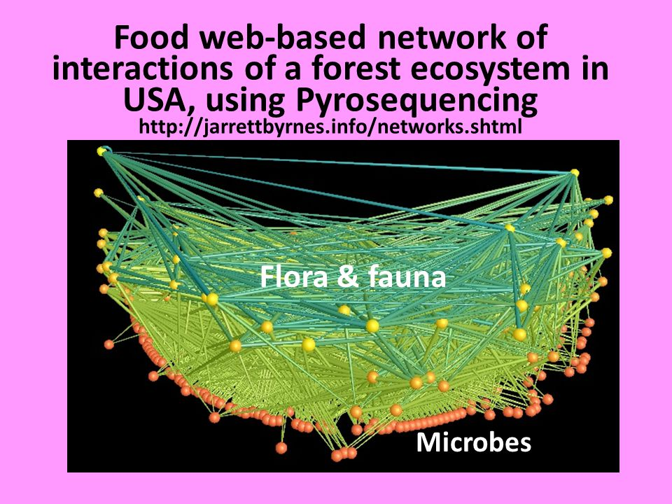 Food web-based network of interactions of a forest ecosystem in USA, using Pyrosequencing http://jarrettbyrnes.info/networks.shtml Flora & fauna Microbes