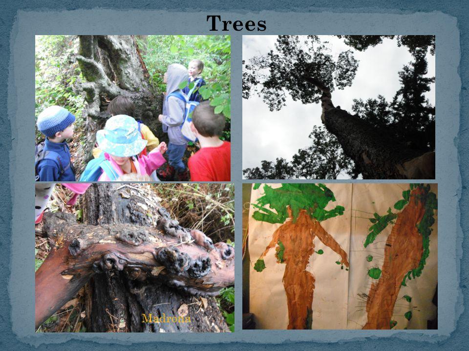 Trees Madrona
