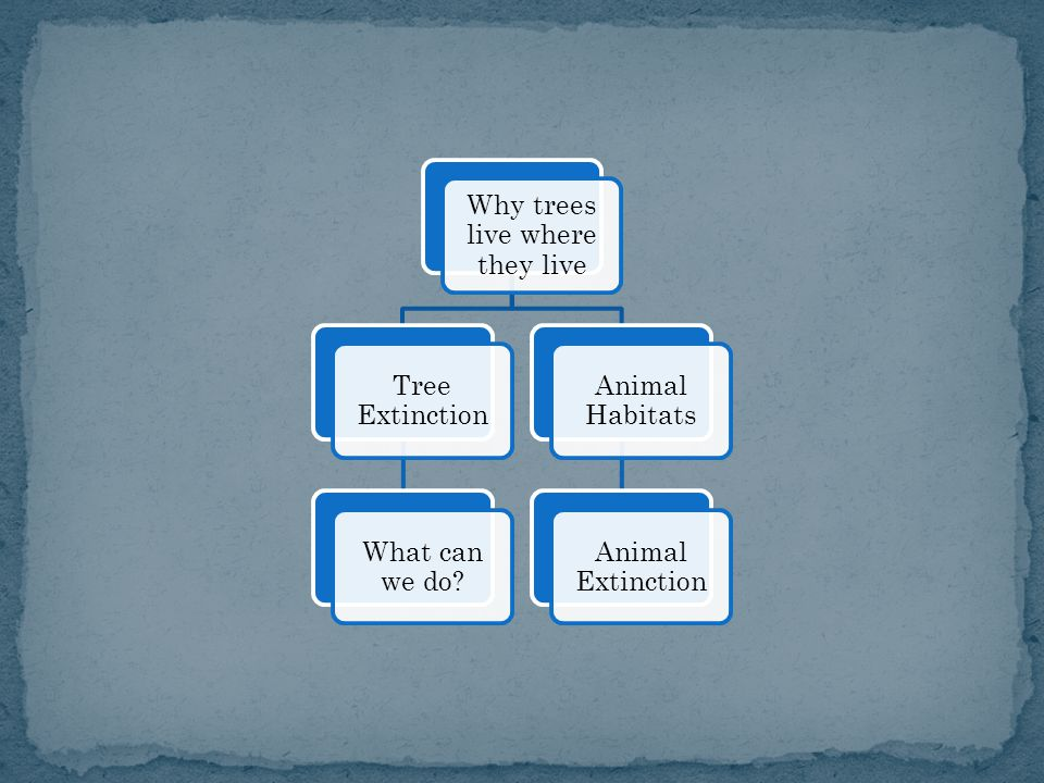 Why trees live where they live Tree Extinction What can we do Animal Habitats Animal Extinction