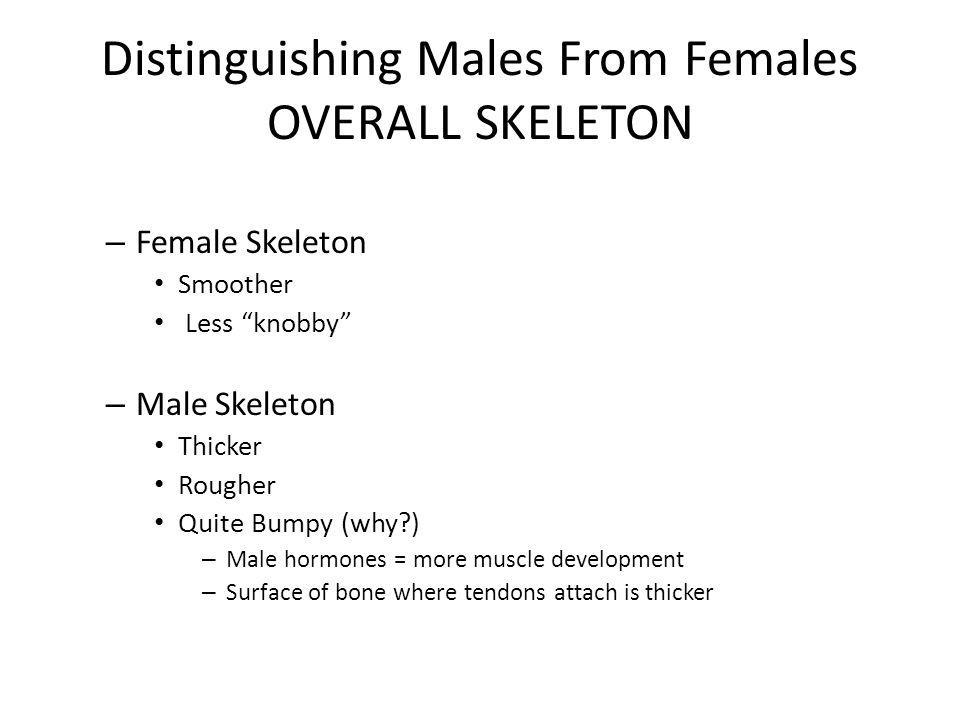 """Distinguishing Males From Females OVERALL SKELETON – Female Skeleton Smoother Less """"knobby"""" – Male Skeleton Thicker Rougher Quite Bumpy (why?) – Male"""