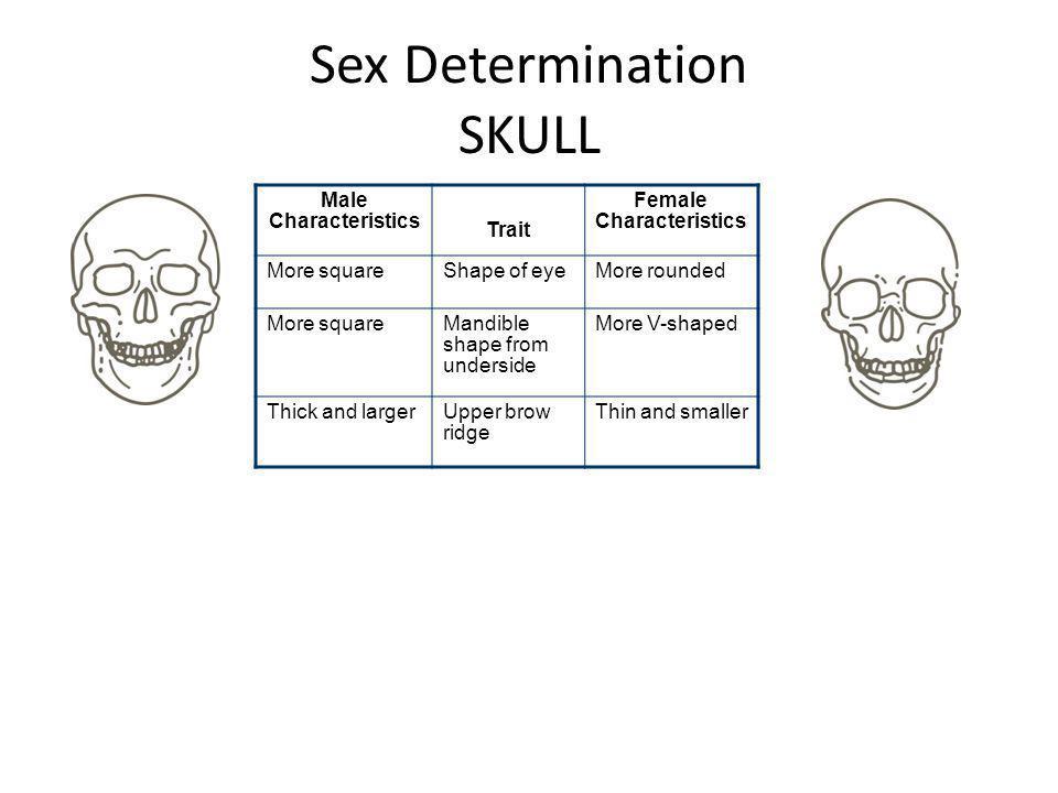 Sex Determination SKULL Male Characteristics Trait Female Characteristics More squareShape of eyeMore rounded More squareMandible shape from underside
