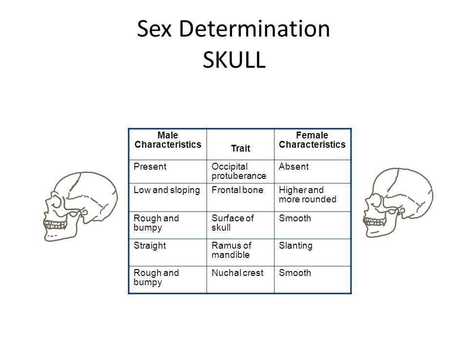 Sex Determination SKULL Male Characteristics Trait Female Characteristics PresentOccipital protuberance Absent Low and slopingFrontal boneHigher and m