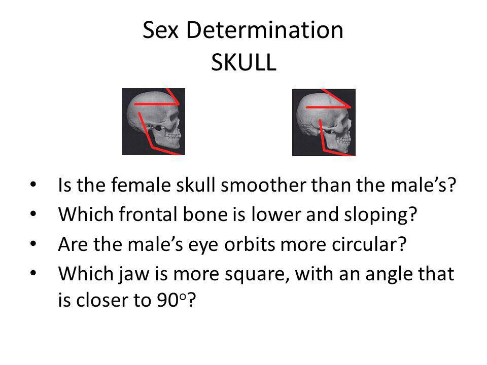 Sex Determination SKULL Is the female skull smoother than the male's? Which frontal bone is lower and sloping? Are the male's eye orbits more circular