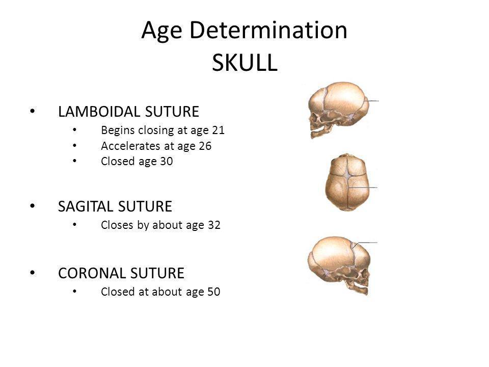 Age Determination SKULL LAMBOIDAL SUTURE Begins closing at age 21 Accelerates at age 26 Closed age 30 SAGITAL SUTURE Closes by about age 32 CORONAL SU