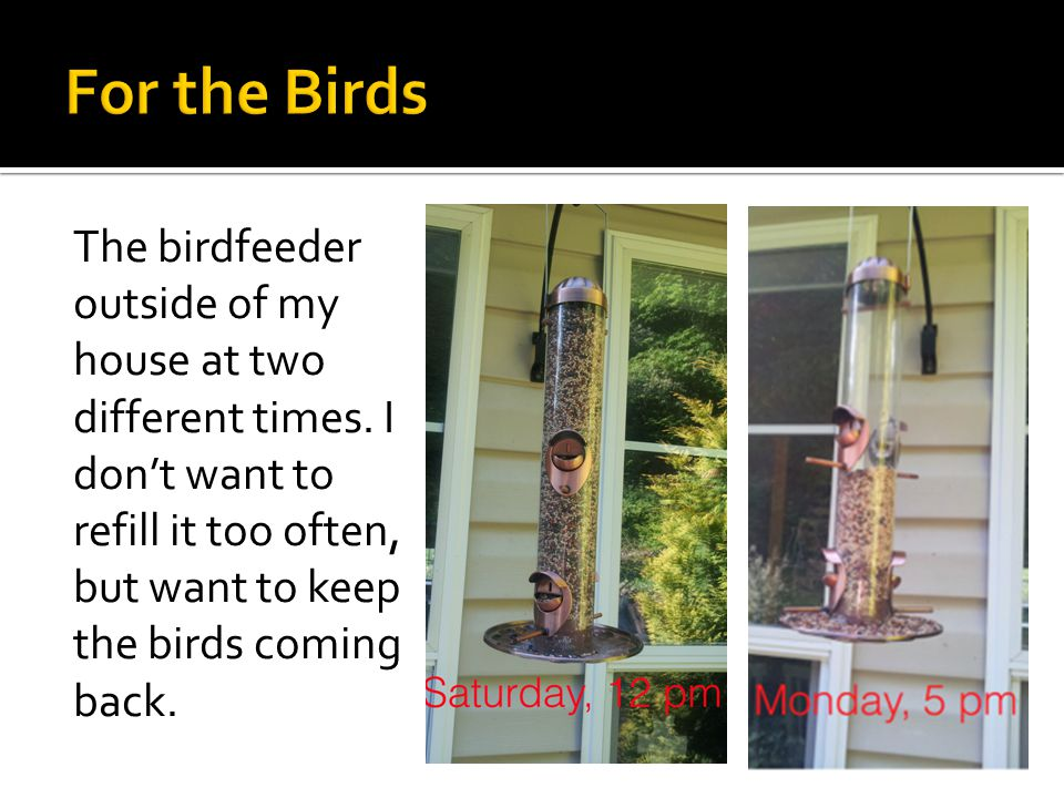 The birdfeeder outside of my house at two different times.