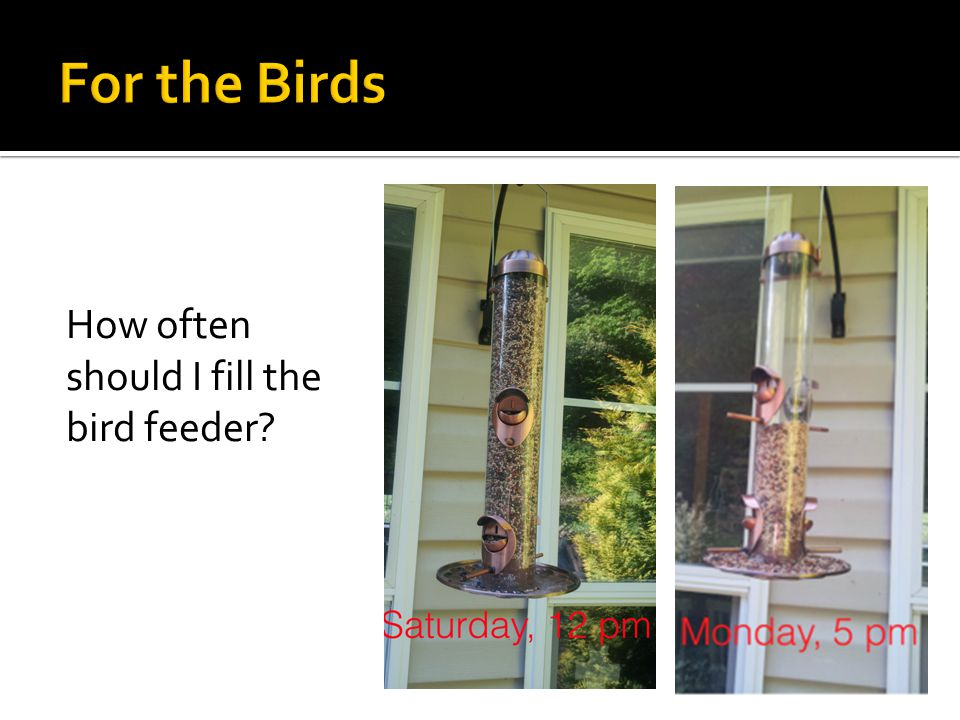 How often should I fill the bird feeder