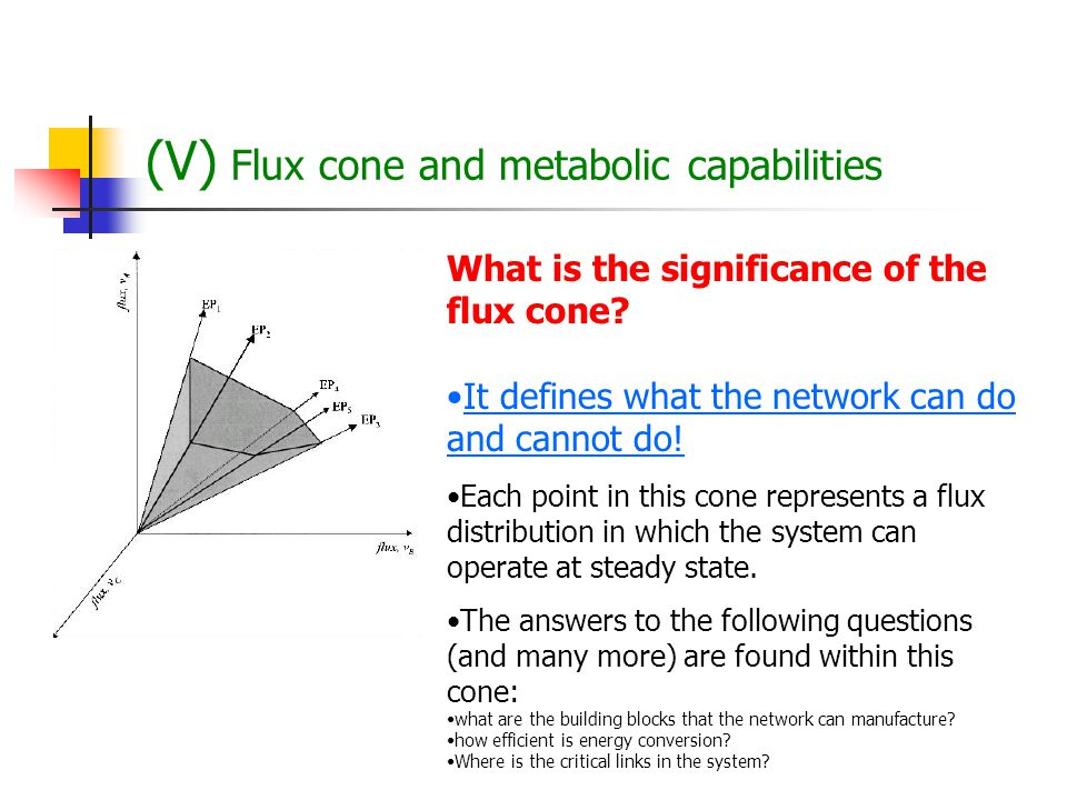 (V) Flux cone and metabolic capabilities Observation: the number of reactions considerably exceeds the number of metabolites The S matrix will have mo